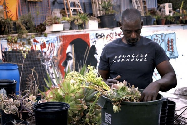 Urban Gardening: Can You Dig This?
