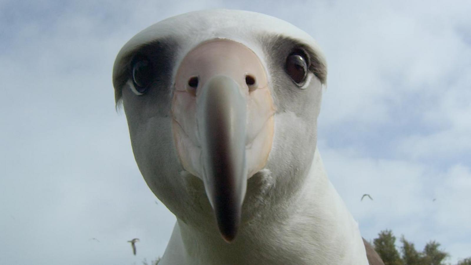 Bird looking at camera