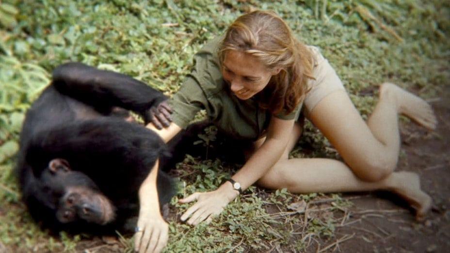 Jane with chimpanzee